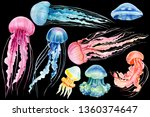 Set Of Jellyfish On An Isolated ...
