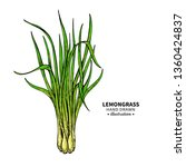 lemongrass vector drawing.... | Shutterstock .eps vector #1360424837