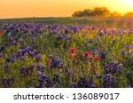 Texas Wildflowers Awash In...