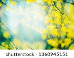 sunny spring nature background... | Shutterstock . vector #1360945151