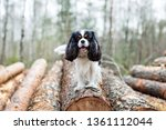 dog standing on the  pile of... | Shutterstock . vector #1361112044
