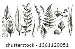 plant illustration. pencil... | Shutterstock . vector #1361120051