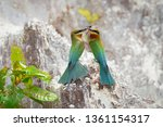pair of blue tailed bee eater ... | Shutterstock . vector #1361154317