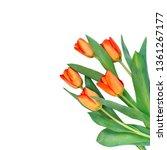 Orange Tulips Isolated On Whit...