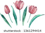 Pink Tulips Clipart. Hand Draw...