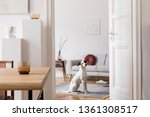 stylish scandi interior of home ... | Shutterstock . vector #1361308517