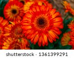 beautiful isolated spring... | Shutterstock . vector #1361399291