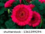beautiful isolated spring... | Shutterstock . vector #1361399294