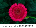 beautiful isolated spring... | Shutterstock . vector #1361399297