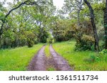 hiking trail through the lush... | Shutterstock . vector #1361511734