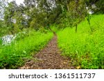 hiking trail through the lush... | Shutterstock . vector #1361511737