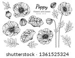 Collection Set Of Poppy Flower...