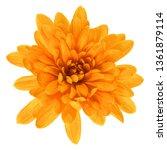 one chrysanthemum flower head... | Shutterstock . vector #1361879114