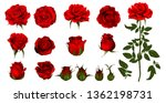 Stock vector rose flower set of blooming plant garden rose isolated icon of red blossom petal and bud with 1362198731