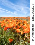 poppies and the sky | Shutterstock . vector #1362306677