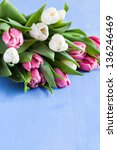 fresh tulips with copy space - stock photo