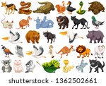 set of wild animals illustration | Shutterstock .eps vector #1362502661
