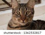 Cross Eyed Cat Staring In...