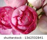 pink rose bouquet | Shutterstock . vector #1362532841