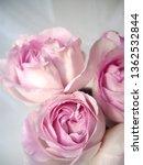 pink rose bouquet | Shutterstock . vector #1362532844