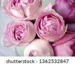 pink rose bouquet | Shutterstock . vector #1362532847