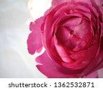 pink rose bouquet | Shutterstock . vector #1362532871