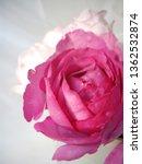 pink rose bouquet | Shutterstock . vector #1362532874