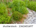 vegetation closeup around the... | Shutterstock . vector #1362601697