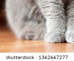 soft cat paws sitting on floor | Shutterstock . vector #1362667277