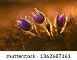 springtime season. beautifully...   Shutterstock . vector #1362687161