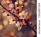 springtime. beautiful flowering ...   Shutterstock . vector #1362687164