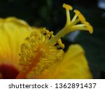Close Up View Of A Yellow...