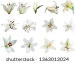 illustration with lily flowers... | Shutterstock .eps vector #1363013024