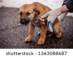 Stock photo brown shaggy and fluffy homeless puppy is frozen and looks unhappy and scared and near human hands 1363088687