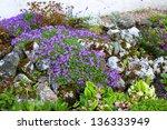 Spring Flowerbed In Garden.