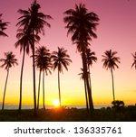 Tree Silhouettes Fiery Backdrop