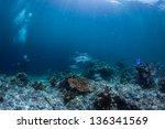 scuba diving with grunts fish | Shutterstock . vector #136341569