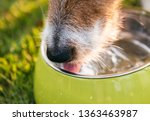closeup shot of dog snout...   Shutterstock . vector #1363463987