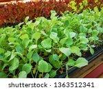 fresh organic vegetable... | Shutterstock . vector #1363512341