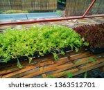 fresh organic vegetable... | Shutterstock . vector #1363512701