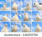 Dove Collection Against The...