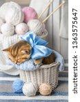 little striped kitten sleeps in ... | Shutterstock . vector #1363575647