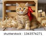 little striped kitten playing... | Shutterstock . vector #1363576271