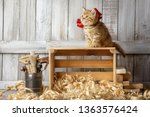 little striped kitten playing... | Shutterstock . vector #1363576424
