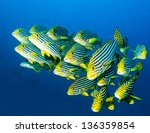 School Of Oriental Sweetlips I...