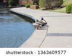 ducks on the edge of the river. ... | Shutterstock . vector #1363609577