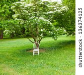 White chair in spring  park. Ready for photo shoot. - stock photo