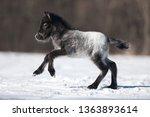 A Newborn Horse Foal Grey...