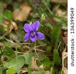 Wood Violet Or Dog Violet In...