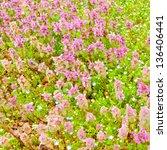 Spring wild flowers background - stock photo